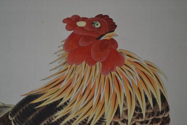 若冲鶏UP5_R