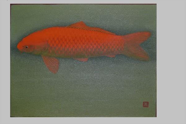 錦鯉(赤)①