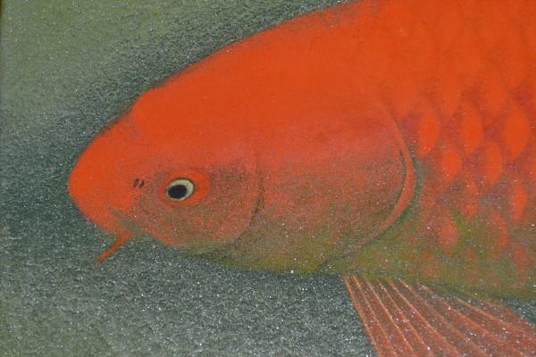 錦鯉(赤)③