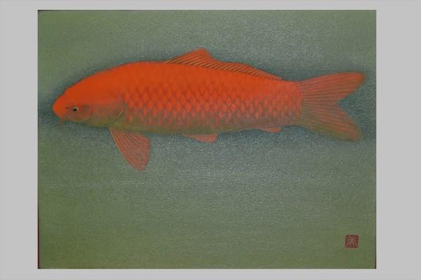 錦鯉(赤)